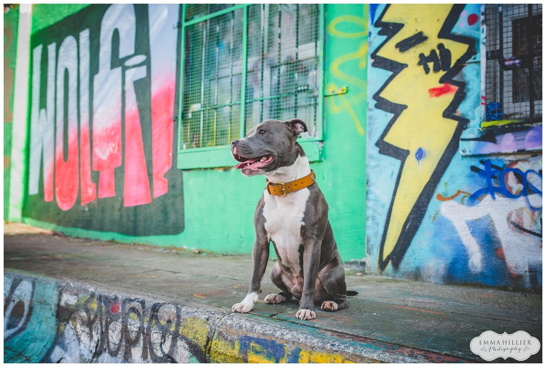 Dog portrait photographer Liverpool