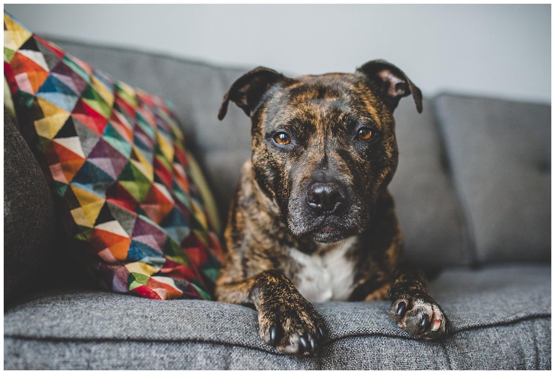 Liverpool dog photographer